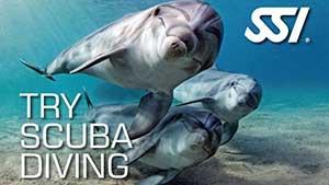 Try Scuba Samui