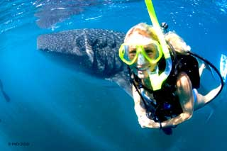 Whales Shark Koh Samui
